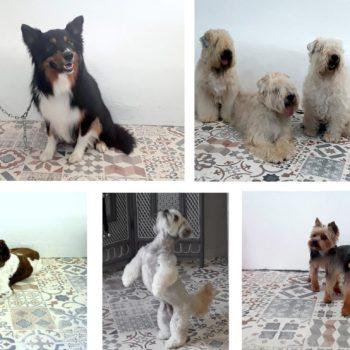 toilettage chiens carcassonne